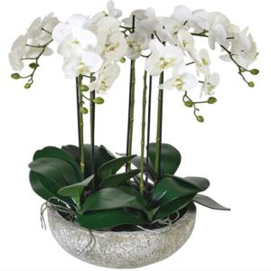 Coppa ceramica con cinque piante phalenopsis