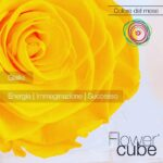 FlowerCube con rosa gialla