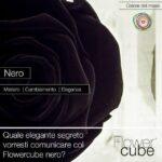 FlowerCube Nero