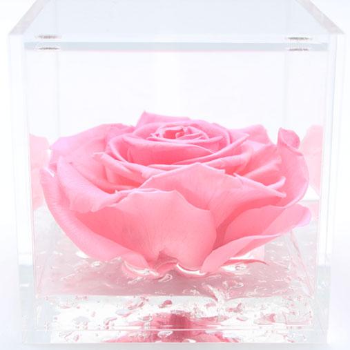 FlowerCube con rosa rosa