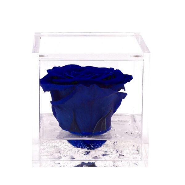 FlowerCube con rosa blu