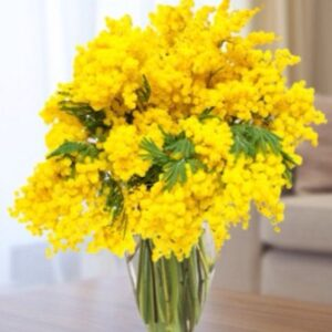 splendido bouquet di mimosa
